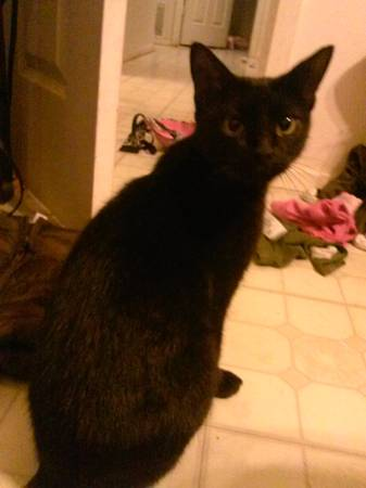Free Cat and Kittens (Lacy Lakeview)
