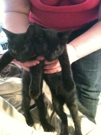 Kittens free to good home (waco tx)