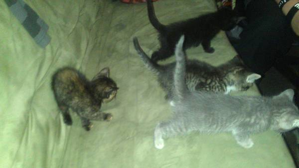 free kittens so cute (2006 Alexander Waco, Tx)