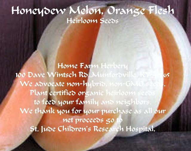 4  Melon  Honeydew Orange Flesh Non-HybridNon-GMO Seeds FREE shipping
