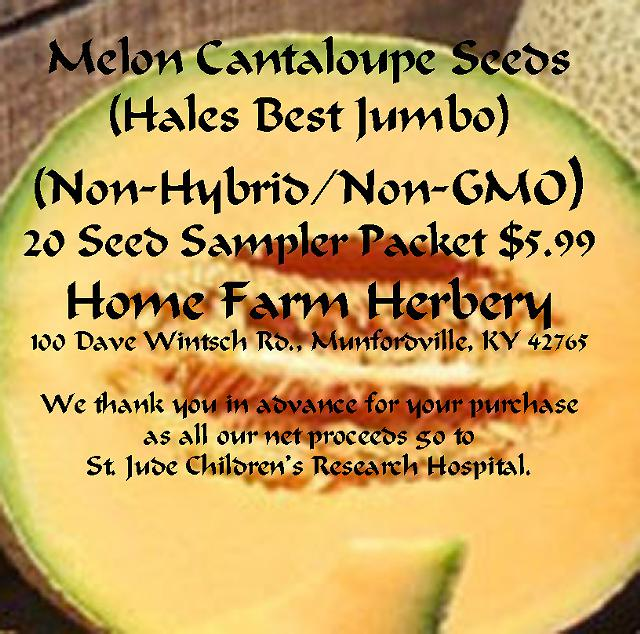 5  Melon Cantaloupe Hales Best Jumbo Heirloom Seeds Non-HybridNon-GMO FREE shipping