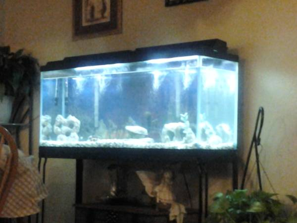 55 Gallon fish tank with stand And much more - $175 (55 Gallon fish tank)
